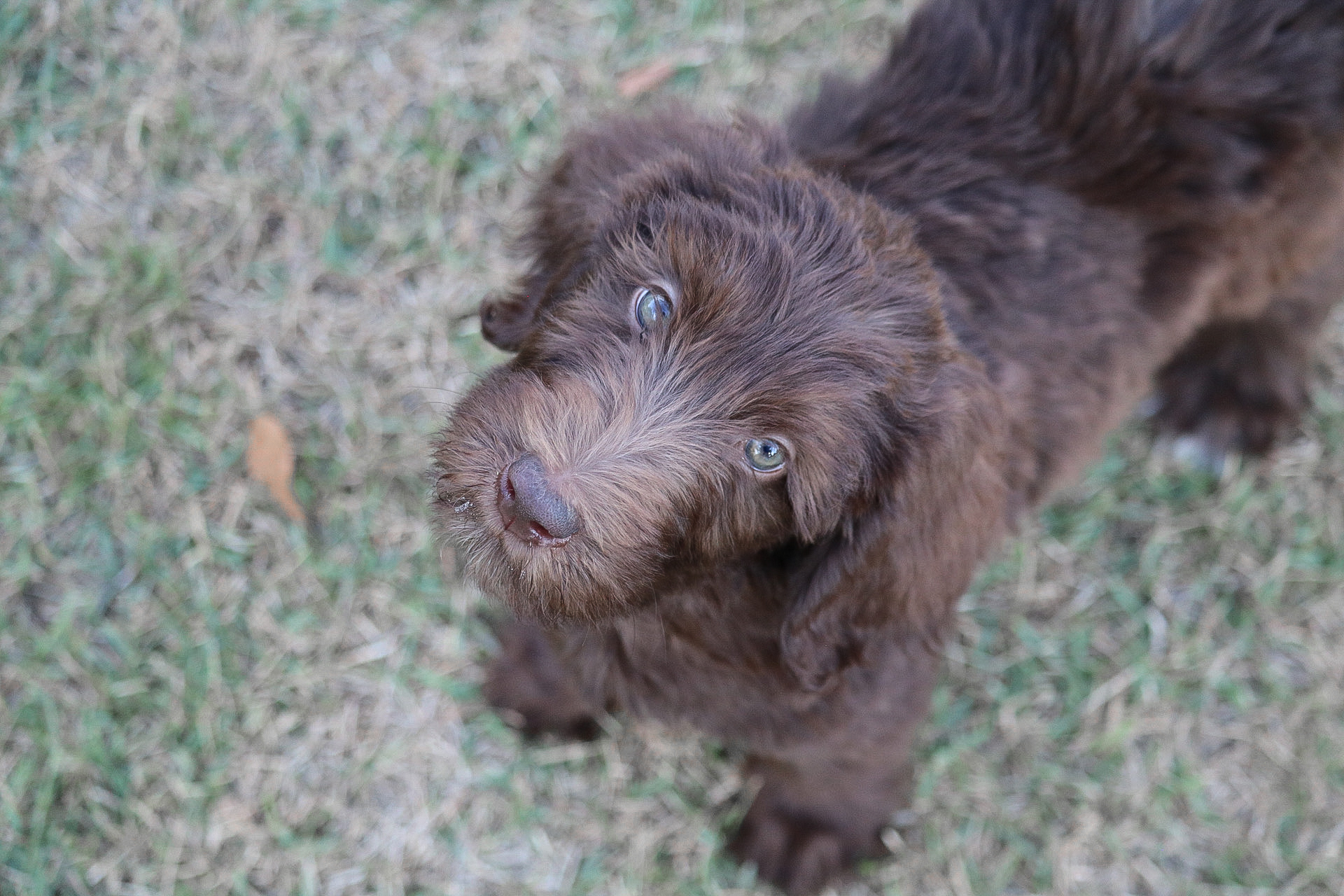 Maple-Male-Reserved