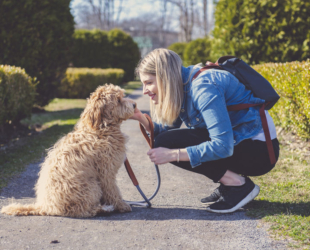 How to Exercise Your Labradoodle
